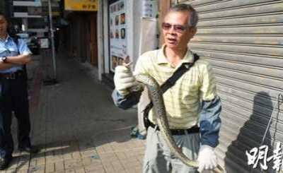动态图片 冯提莫吃精门 巨蟒肚内惊见失踪好友