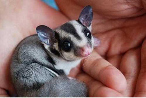 全球10大最小宠物 世界上最可爱的迷你兔