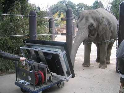 """亚洲象可以""""使用""""平板电脑 李银桥简历"""