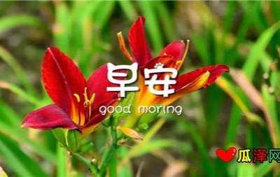 早安鲜花图片带字图片 花带图片欣赏