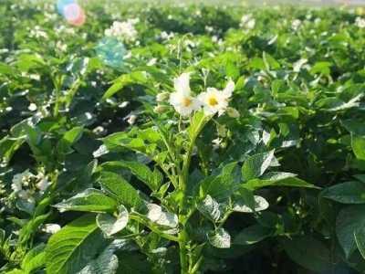 二月份露地种什幺蔬菜 2月底适合在家种的菜