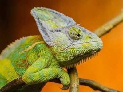 盘点十大超级视力动物 考验你视力找动物