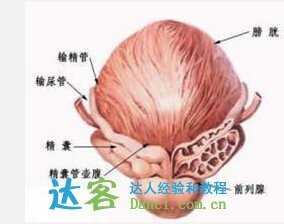 按摩前列腺的手法图解 如何按摩前列腺